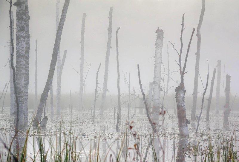 болото, минимализм ,черно белое, карелия, север, охота Болотный минимализмphoto preview