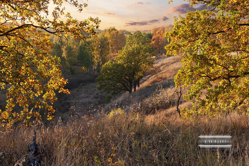 Осенние красотыphoto preview
