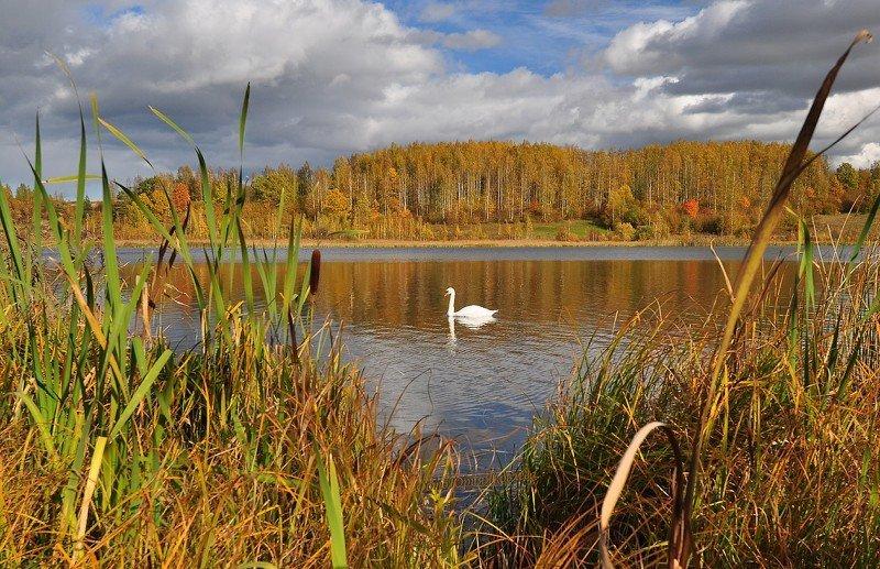 Осенние пейзажиphoto preview