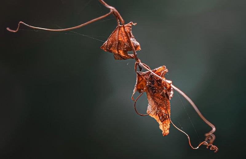 природа, макро, осень, засохший лист, паутина ***photo preview