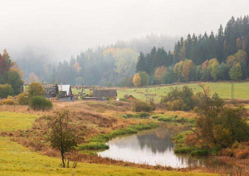 пейзаж,карелия,осень,туман,золотая осень \