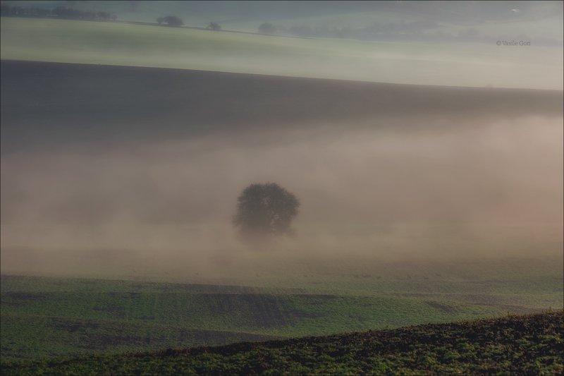 южная моравия,пейзаж,косули,линии,south moravian,lines,туман,свет,czech,осень,чехия,landscapes,поле,дерево DIAGONALEphoto preview