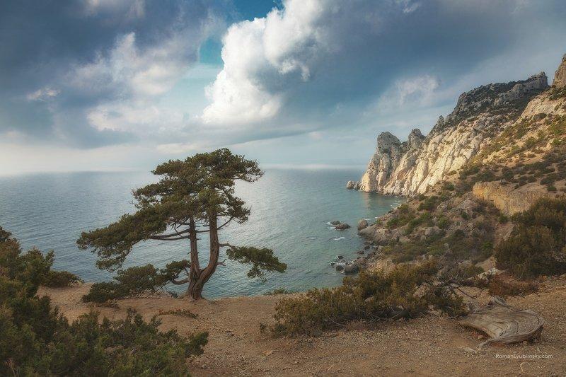 крым, новый свет, крым, сосна, дерево, пейзаж, горы У старой сосныphoto preview