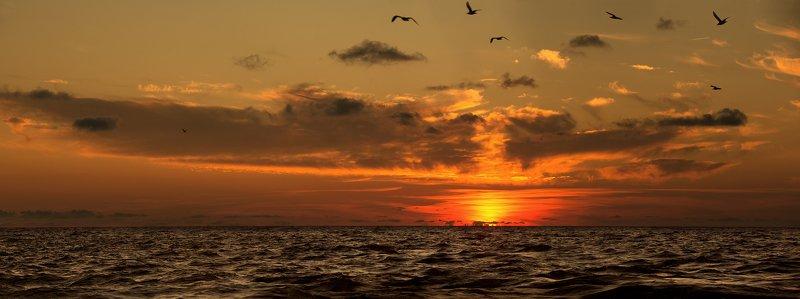 сочи, закат, море, облака, чайки Осенние закаты в Сочиphoto preview