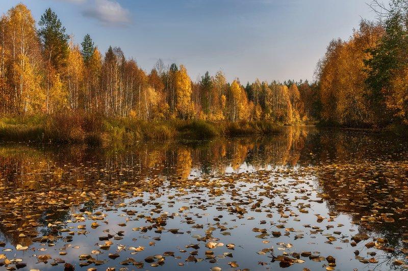 осень, сентябрь, река, вода, небо, отражения, тишина, кусты, деревья, листопад, листоход Листопад на тихой речкеphoto preview