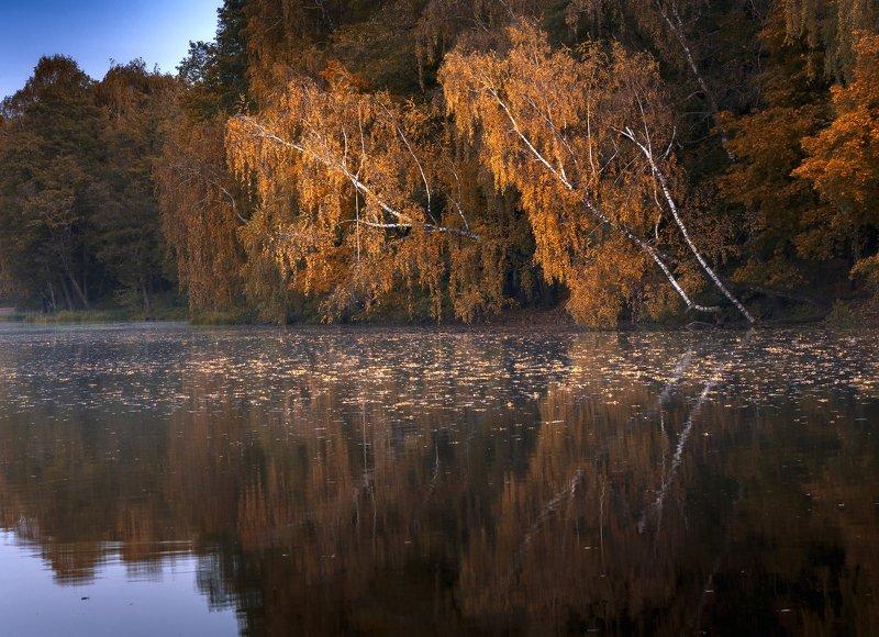 осень,природа,пейзаж,вода,красота Склонились у воды березыphoto preview