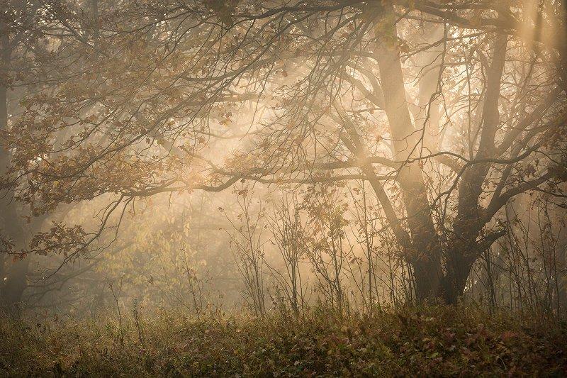 природа утро туман деревья Лес наполняется утренним светомphoto preview