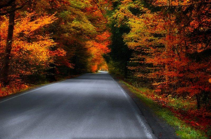 Дорога через буковый лес.photo preview