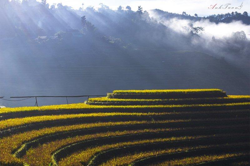 #landscape.#sellingphoto.#mucangchai Mu cang chaiphoto preview