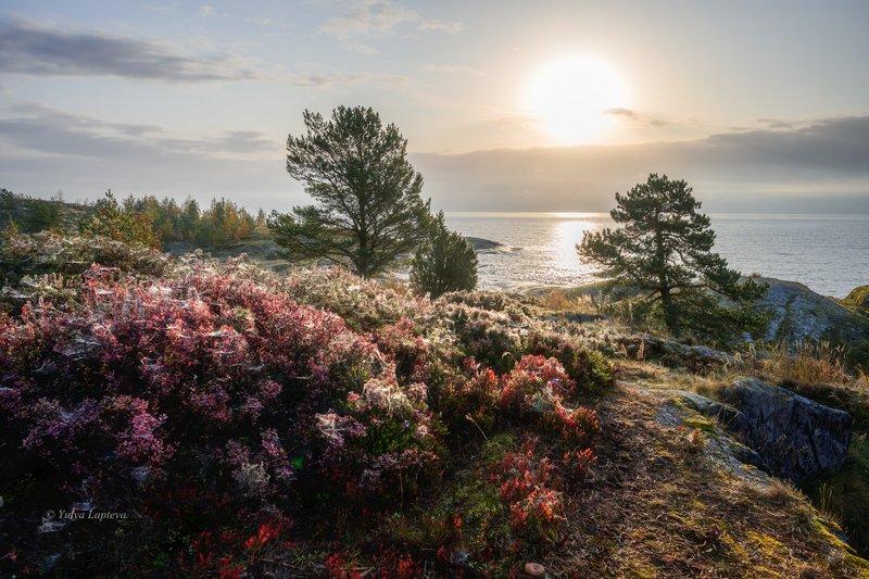 карелия,осень,туман,красота,рассвет,утро,сосны \