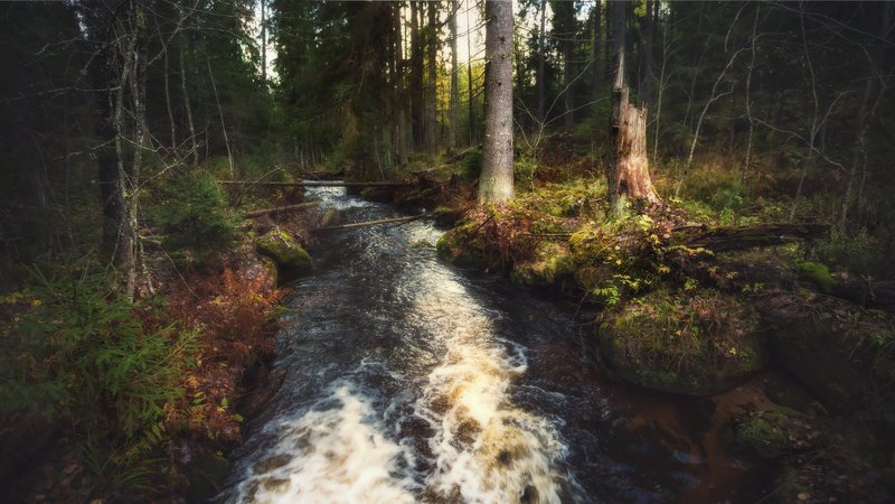 карельскийперешеек, природа, пейзаж Быстрянка . . .photo preview