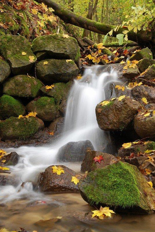 осень, листья, пейзаж, природа, ручей, вода,  Бегут осенние ручьи.photo preview