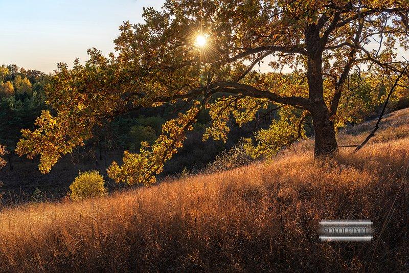 Осенний дубphoto preview