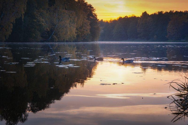 утки, пруд, природа, пейзаж, осень, закат Осенним вечеромphoto preview