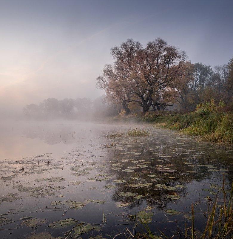 природа утро туман деревья На озере осеньphoto preview