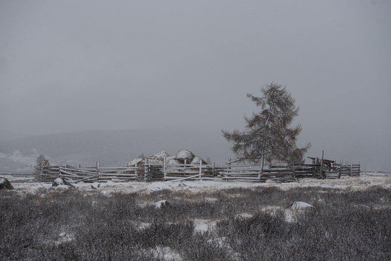 winter, landscape ***photo preview