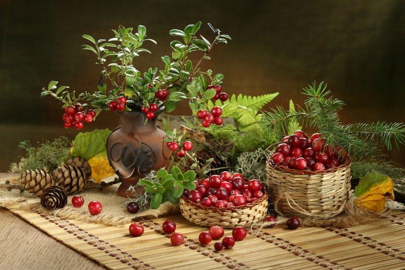 природа, ягоды, брусника, клюква, веточки Лесные ягодыphoto preview