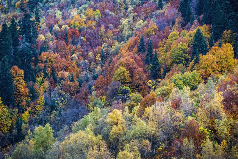 кчр,домбай,гоначхир,теберда,горы,карачаево-черкесия,осень Осенняя палитра...photo preview