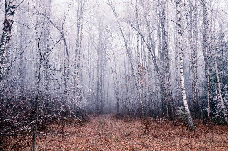 лес, осень, зима, иней, пейзаж Лесные шорохиphoto preview