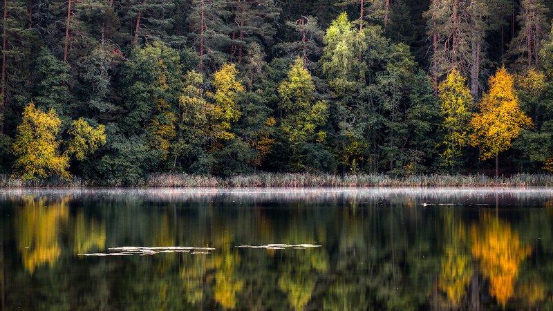 Контраст осеннего лесаphoto preview