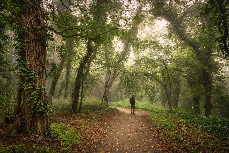 гулять в волшебном саду magic garden autumn foggy morning dranikowski park path trees mist волшебный садphoto preview