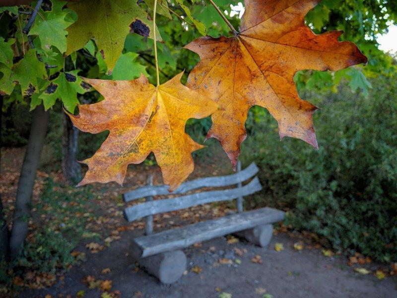 осень,листва,октябрь,сюжет,желтый,свет,лавка,цвет,композиция, photo preview