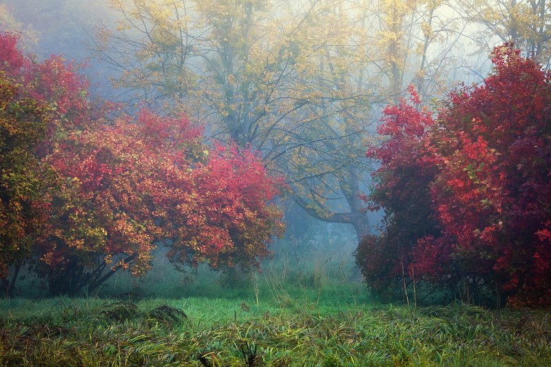 autumn symphony осенняя симфония magic garden park trees grass colourful mist foggy morning осенняя симфонияphoto preview