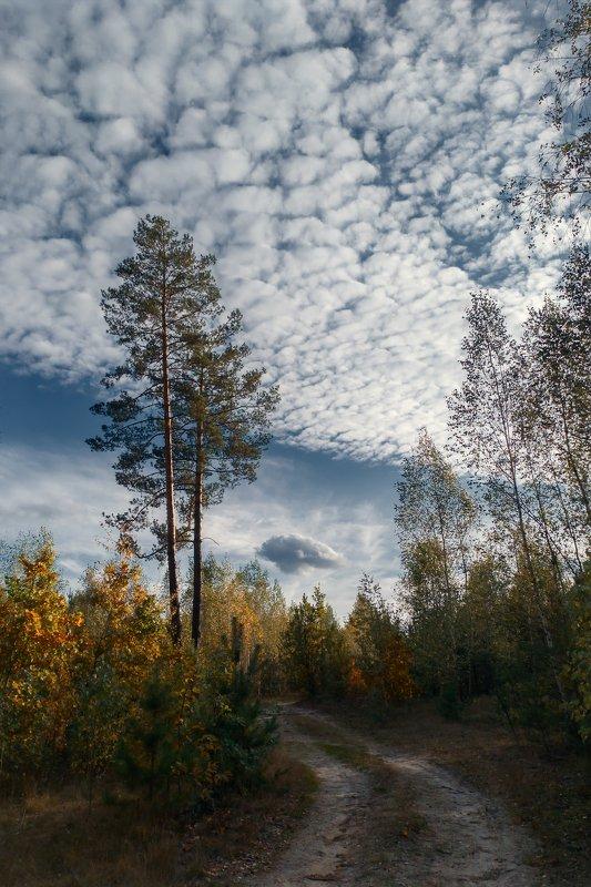 украина, коростышев, природа, лес, тишина, уединение, счастье, жизнь, воздух, вдохновение, облака, березки, деревья, фотограф, чорный, ***photo preview