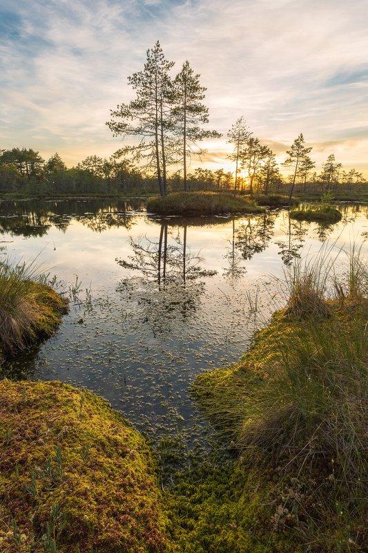 На болотных топяхphoto preview