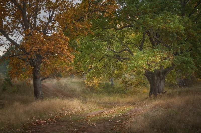 осень, дубы, лес Оранжевый и зеленыйphoto preview