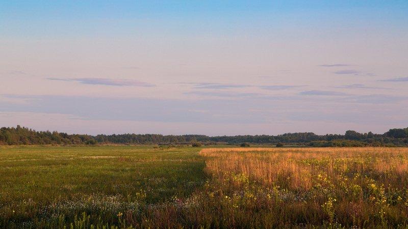 лето, июль, луг, зелень, сухая трава Лето-осеньphoto preview