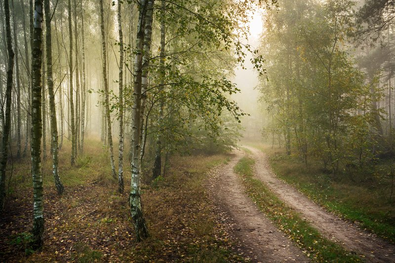 two road два пути path forest magic mist foggy morning trees dranikowski woods fog autumn fall два путиphoto preview