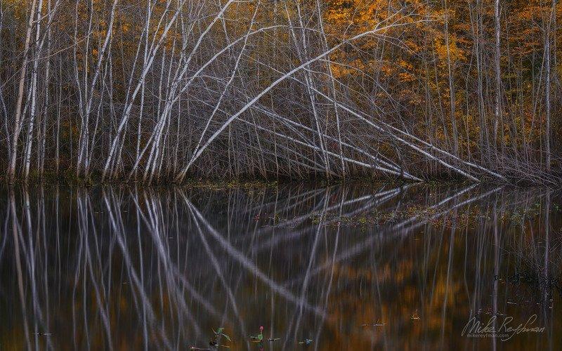fall colors, bog, wisconsin, usa Осень на Болотеphoto preview
