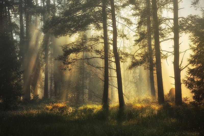 landscape, poland, light, autumn, awesome, amazing, rays, sunrise, sunset, lovely, nature, travel, morning, trees, spider, web, breath Forest\'s breathphoto preview