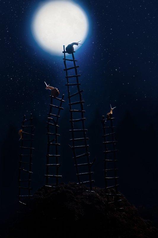 улитки, декорации Ночной дозорphoto preview