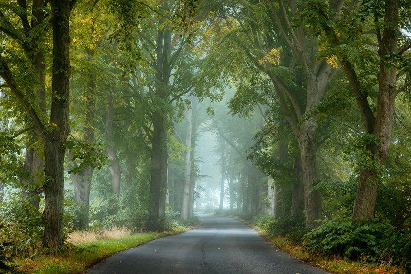 misty road path autumn fall fog dranikowski foggy morning magic trees light Misty roadphoto preview