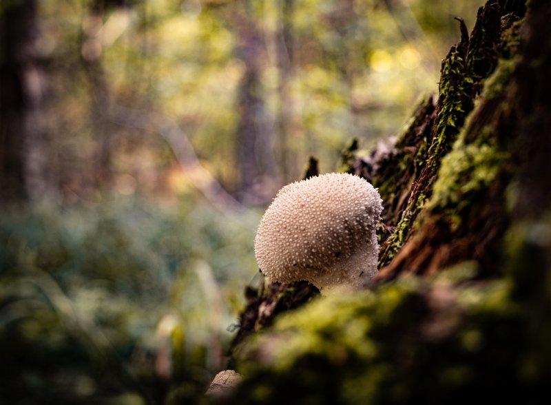 макро Уютно на пне в светлом лесуphoto preview