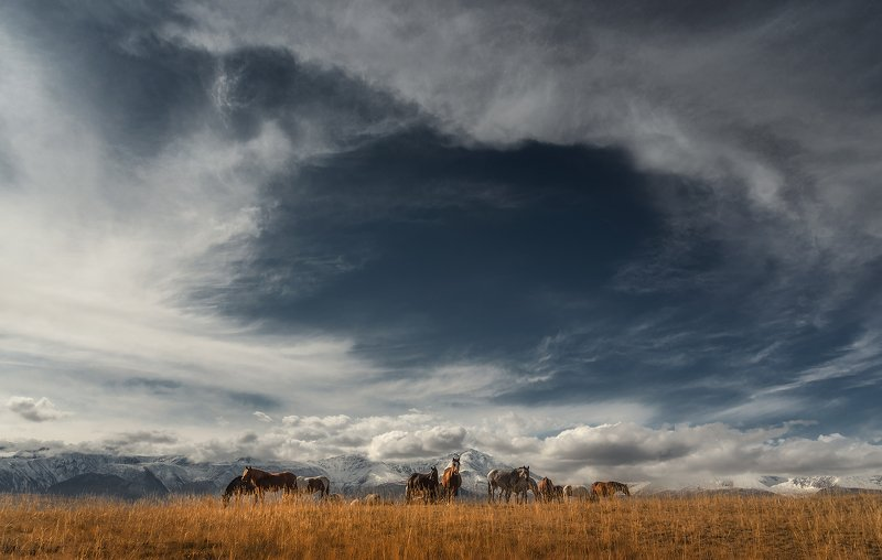алтай, курайская степь, кони, лошади, небо, горный алтай, пейзаж, северо-чуйский хребет Небесный порталphoto preview