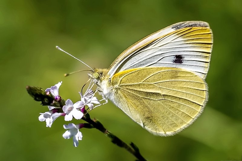 Бабочка.photo preview