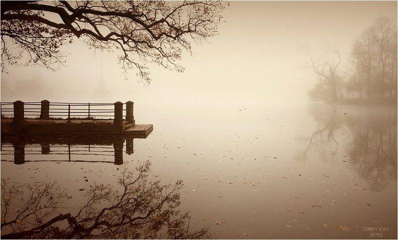 питер, парк, туман, пристань, ветки,  отражение, листва, остров Осеннее хоккуphoto preview