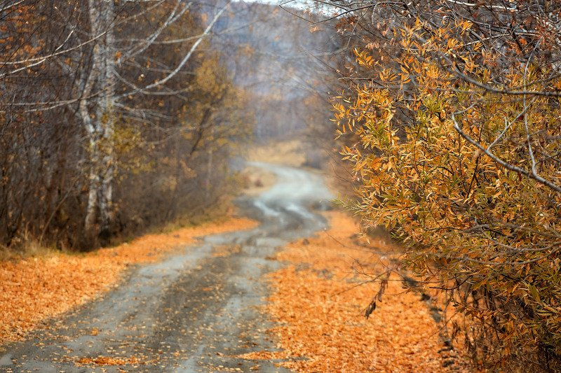 южный урал,оренбургская область, орск, новотроицк,башкирия, башкиртостан Поздняя осень..photo preview