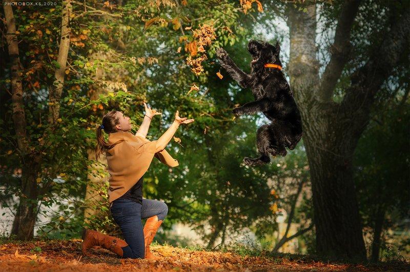 осень, портрет, движение, собака, анималистика Осеньphoto preview