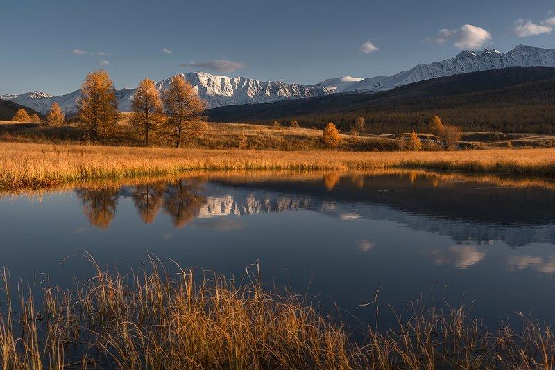 алтай, кони, лошади, небо, горный алтай, пейзаж, северо-чуйский хребет, джангысколь Вечерний Джангыскольphoto preview