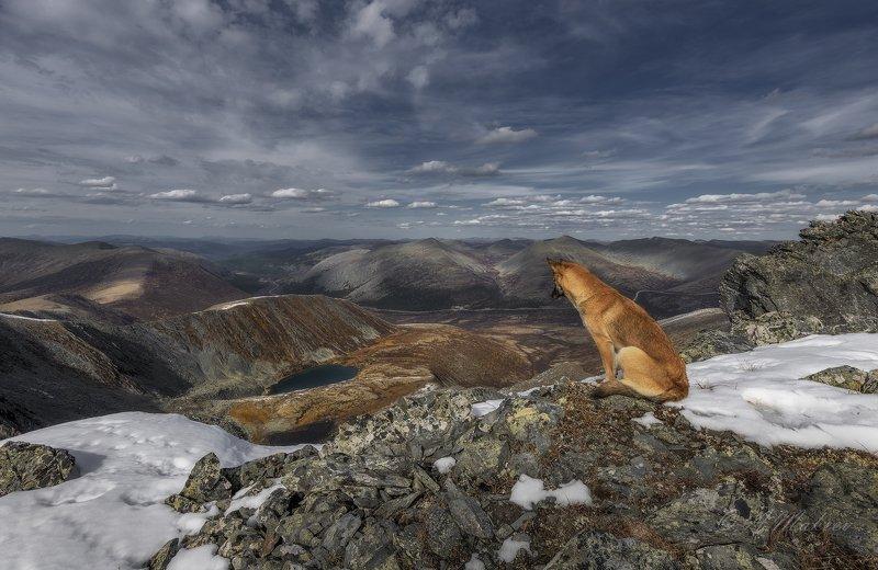 хакасия, горная хакасия, саянский перевал, позарым Созерцательphoto preview