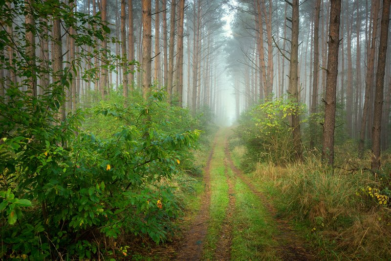 лесная дорога forest road magic mist foggy morning trees path misty dranikowski green autumn fall nature Лесная дорогаphoto preview