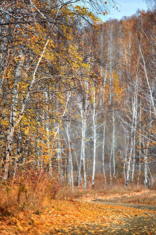 южный урал,оренбургская область, орск, новотроицк,башкирия, башкиртостан Осенняяphoto preview