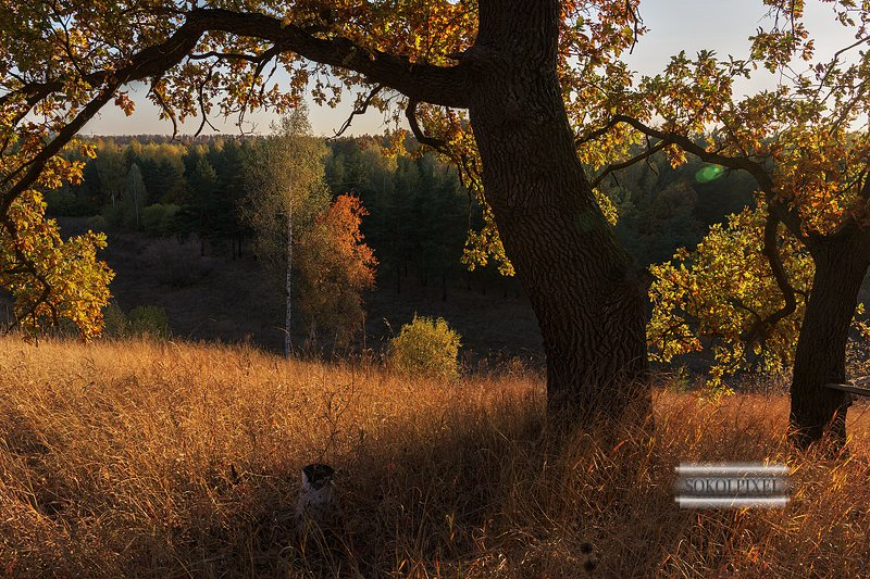 Окно в осеньphoto preview