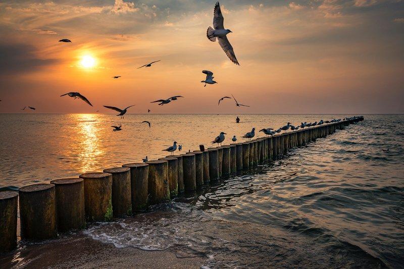 закат над балтийским морем sunset over the baltic sea gulls birds water sunset sun water poland dranikowski sky clouds nature закат над Балтийским морем чайкиphoto preview