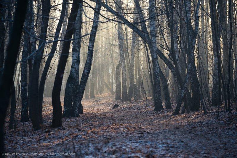 europe, kuzminki, russia, autumn, fog, gauze, haze, hoar-frost, morning, nature, november, park, европа, кузьминки, москва, россия, дымка, иней, ноябрь, осень, парк, природа, туман, утро морозная дымка поздней осени / frosty haze of late fallphoto preview
