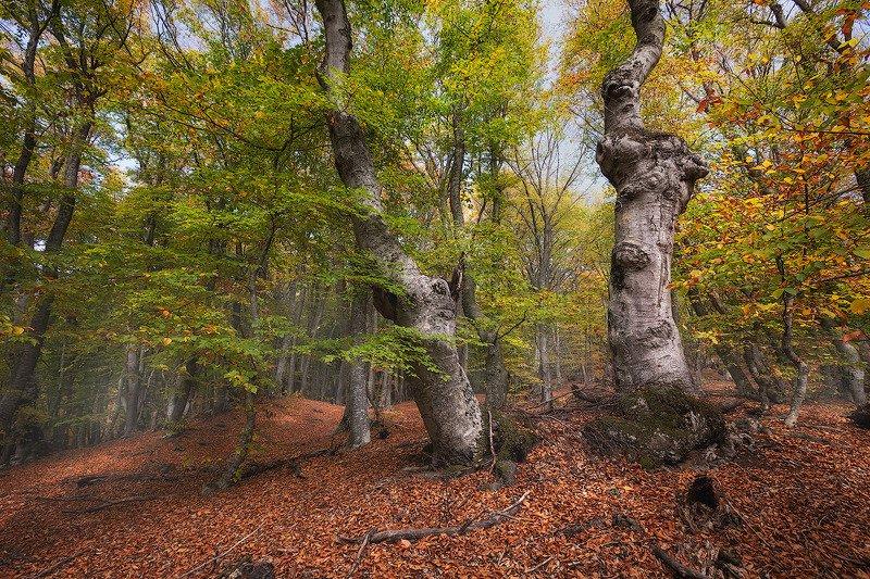 Волшебный лес Демерджиphoto preview